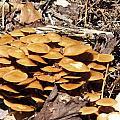 Spring Mushrooms 2 by Gene Cyr