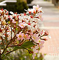 Spring On The Street by Andrea Anderegg