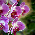 Spring Orchids I by Jeff McJunkin