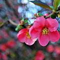 Spring Passion by Marija Djedovic