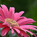 Spring Pink 2014 by Maria Urso