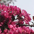 Spring Pink by Anita Burgermeister