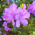 Spring Pink Azalea by Luther Fine Art