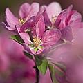 Spring Pink... by Nina Stavlund