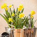 Spring Planting by Amanda Elwell