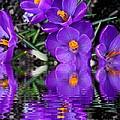 Spring Reflection by Judy Palkimas