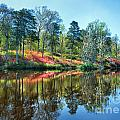 Spring Reflections by Claudia Kuhn