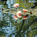 Spring Reflections by Suzanne Gaff