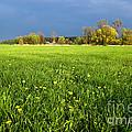 Spring Scenery by Michal Bednarek