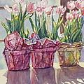 Spring Shadows by Jan Landini