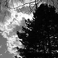 Spring Sky And Pine 1 Bw by Mary Bedy