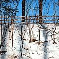 Spring Snow by Barbara Jewell