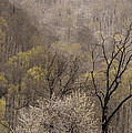 Spring Snow by Tom  Reed