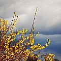 Spring Storm by Annette Persinger