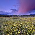Spring Storm At Andalucia by Guido Montanes Castillo