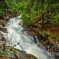 Spring Stream In Acadia by Susan Cole Kelly