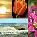 Spring Summer Collage by Sandi OReilly