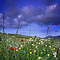 Spring Sunset Windy Days by Guido Montanes Castillo