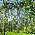 Spring Swamp by Lizi Beard-Ward