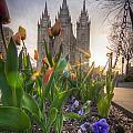 Spring Temple by Nick  Cardona