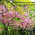 Spring Tree Blossoms by Joan-Violet Stretch