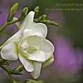 Spring by Trish Tritz