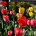 Spring Tulip Garden by Nava Thompson