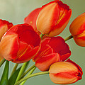Spring Tulips by Courtney Webster