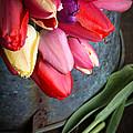 Spring Tulips by Edward Fielding