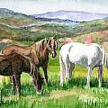 Spring Valley by Linda L Martin