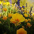 Spring Wildflowers by Saija  Lehtonen