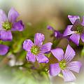 Spring Wildflowers by Stephen Anderson