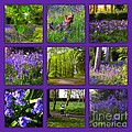 Spring Woodland Picture Window by Joan-Violet Stretch