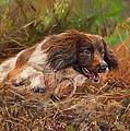 Springer Spaniel 2 by David Stribbling