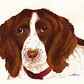 Springer Spaniel  by Nan Wright