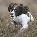 Springer Spaniel Painting by Rachel Stribbling