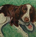 Springer Spaniel With Shoe by Pet Whimsy  Portraits