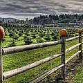 Springhetti Road Pumpkins by Spencer McDonald