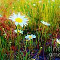 Springing Daisy's by Keri West