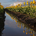 Springs Beautiful Reflection by Mike Reid
