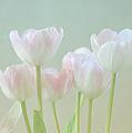 Spring's Pastels by Kim Hojnacki