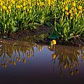 Springs Reflection by Mike Reid