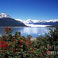 Springtime At Perito Moreno by James Brunker
