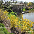 Springtime At The Japanese Gardens by Kathie Chicoine