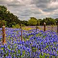 Springtime Beauty by Tom Weisbrook