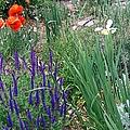 Springtime by Bobbee Rickard