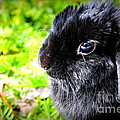 Springtime Bunny by Sophia Elisseeva