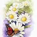 Springtime Daisies  by Brett Winn