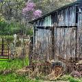 Springtime by Don Schiffner