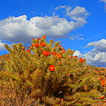 Springtime In Arizona by James Welch